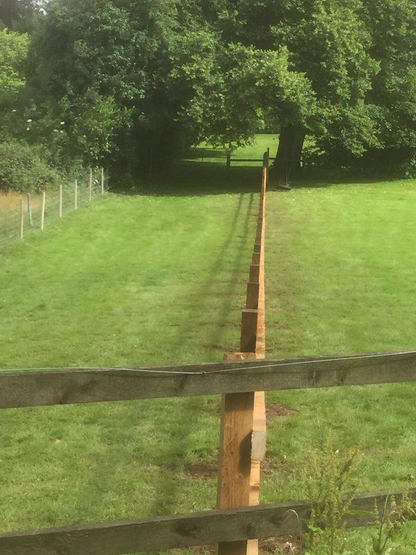 Wooden garden fencing dividing two gardens.