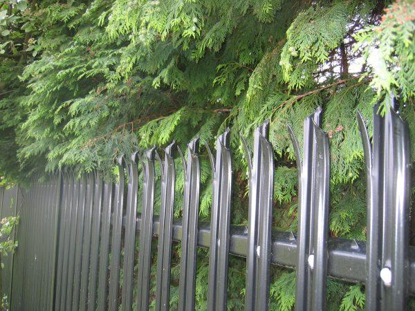 Black steel palisade fencing.