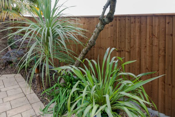 A garden with a wooden fence, the fence has feather edge boards with green plants in front.