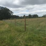 A post and wire fence divides a empty green field.