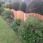 A wooden fence divides two gardens. The fence has close board panels and has trees and plants either side.